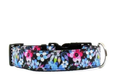 purple and blue dog collar