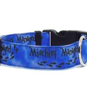 blue mischief dog collar