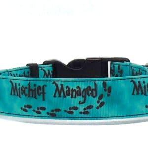 green mischief dog collar