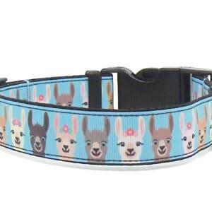 blue llama print dog collar