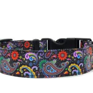 multi paisley dog collar