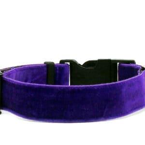 purple velvet dog collar