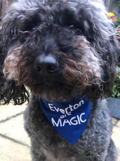 everton are magic bandana
